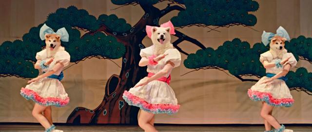 Mofu Mofu Dogs, idol unit